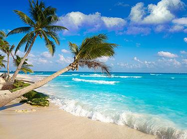 plage de sable avec palmiers au Mexique